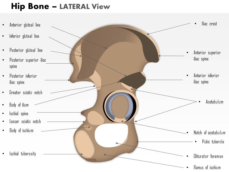 0514 hip bone lateral view medical images for powerpoint 0514hipbonelateralviewmedicalimagesforpowerpointslide01 0514hipbonelateralviewmedicalimagesforpowerpointslide02 toneelgroepblik Image collections