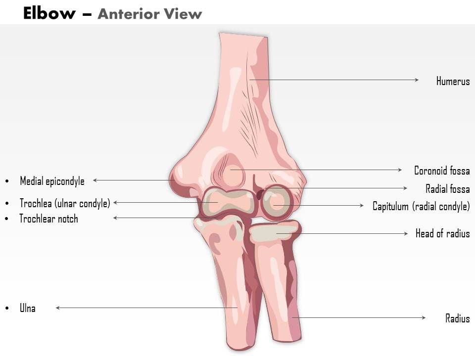 0514 Human Anatomy Elbow Anterior View Medical Images For Powerpoint