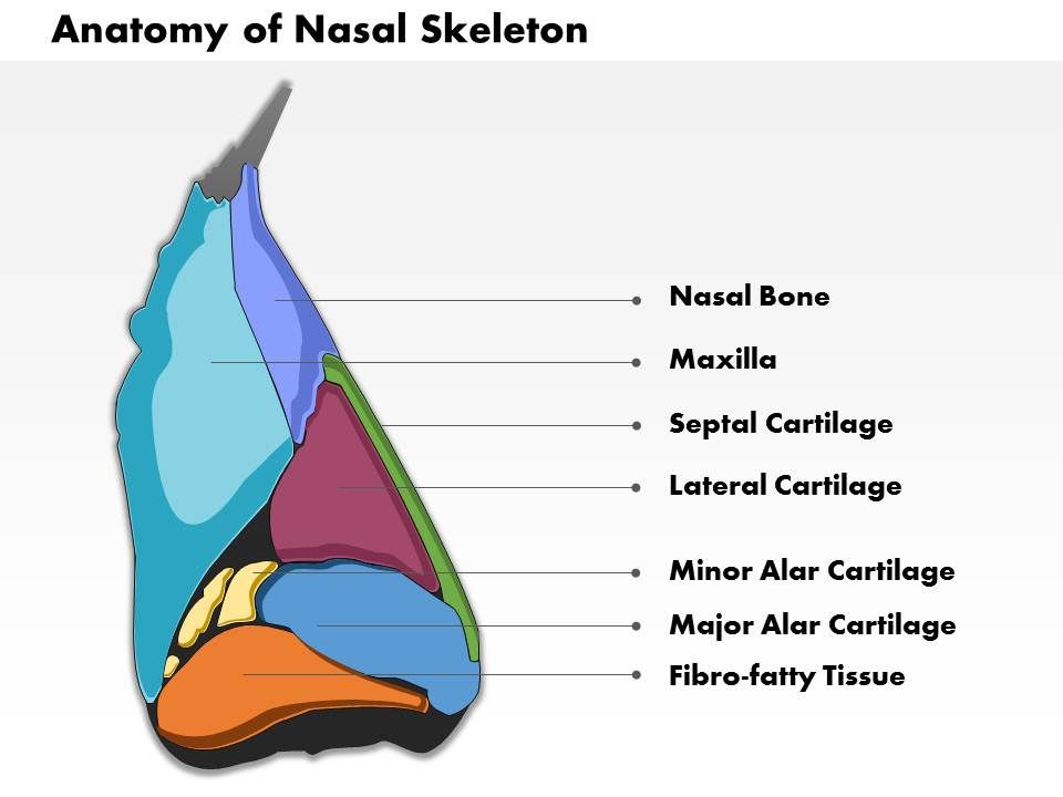 0514 Nose And Its Adjacent Structures Medical Images For Powerpoint