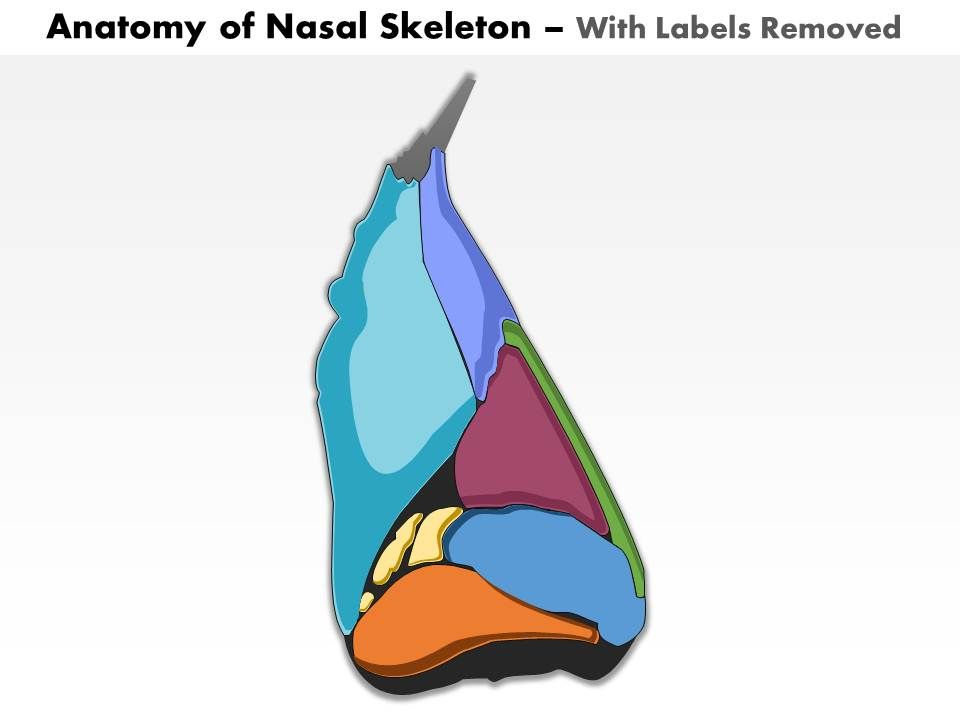 0514 Lateral View Of External Nose Anatomy Of Nasal Skeleton Medical