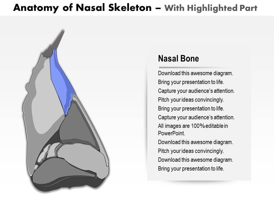 0514 lateral view of external nose anatomy of nasal skeleton medical ...