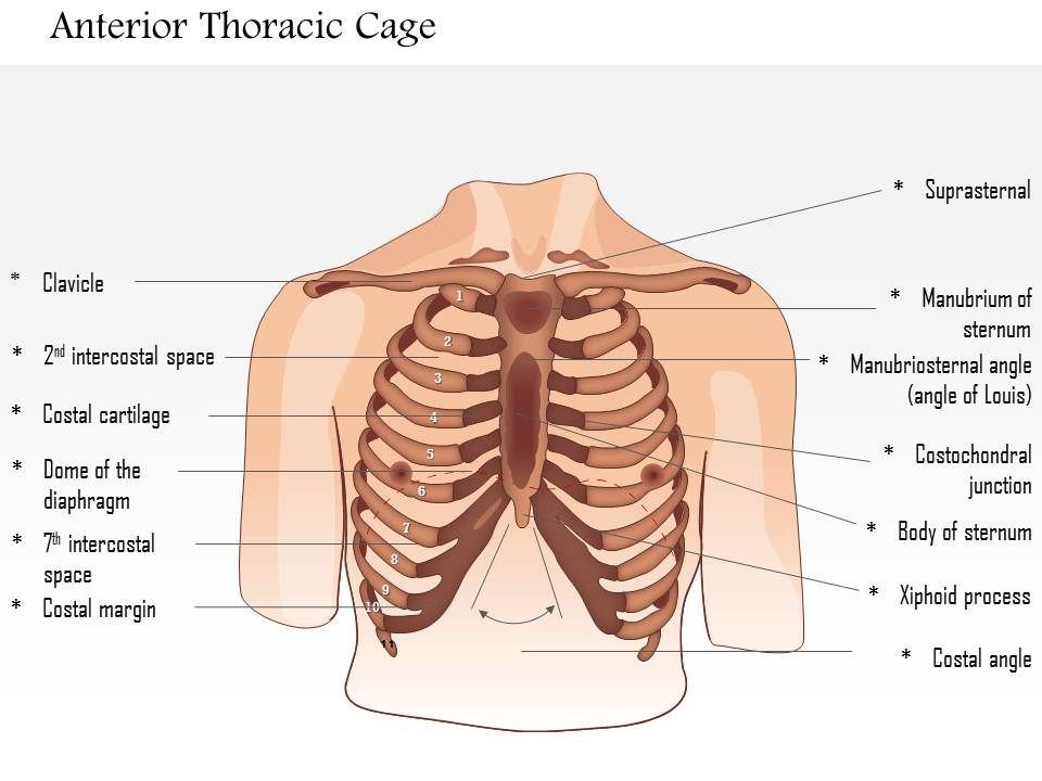 0514 male chest wall anterior view medical images for powerpoint 0514malechestwallanteriorviewmedicalimagesforpowerpointslide01 0514malechestwallanteriorviewmedicalimagesforpowerpointslide02 ccuart Choice Image