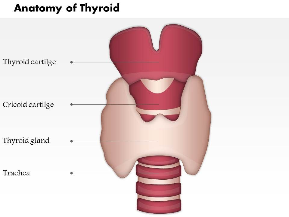0514 neck hyoid bone thyroid cartilage thyroid gland medical, Powerpoint templates