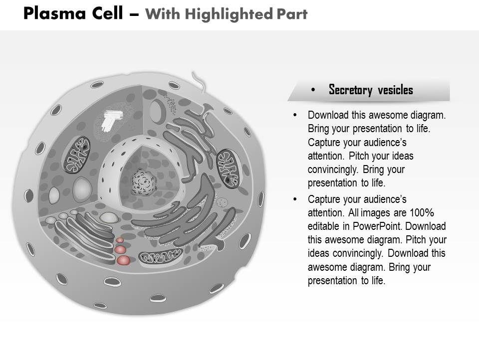 0514 plasma cell immune system medical images for powerpoint slide05 0514plasmacellimmunesystemmedicalimagesforpowerpointslide05 0514plasmacellimmunesystemmedicalimagesforpowerpointslide05 publicscrutiny Gallery