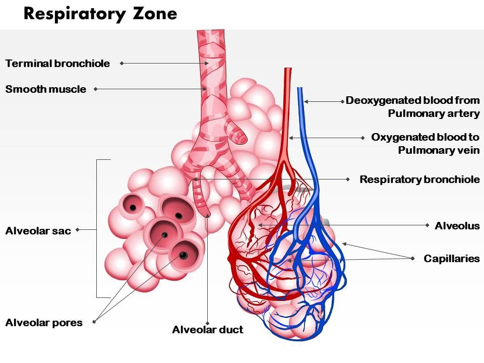 0514 respiratory zone medical images for powerpoint | powerpoint, Presentation templates