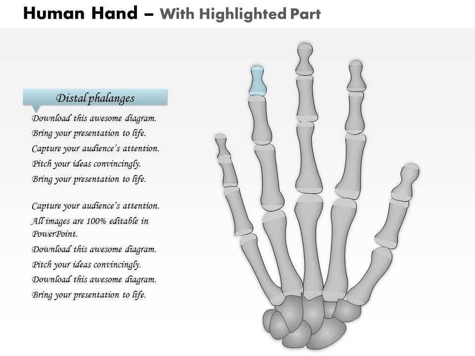 0514_the_human_hand_medical_images_for_powerpoint_Slide03 0514 the human hand medical images for powerpoint powerpoint