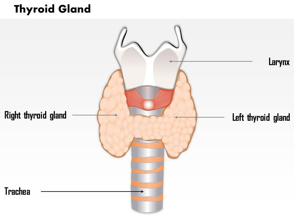 0514 Thyroid Gland Medical Images For Powerpoint Presentation