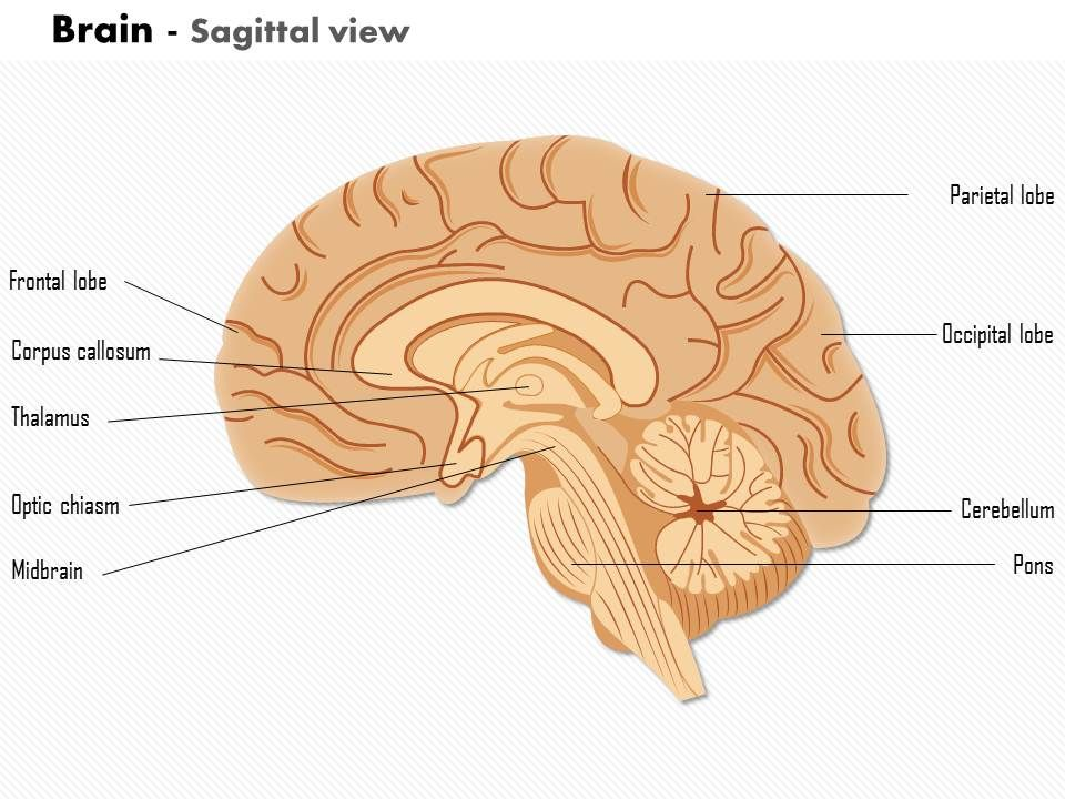 0614 Brain Sagittal View Medical Images For Powerpoint Templates
