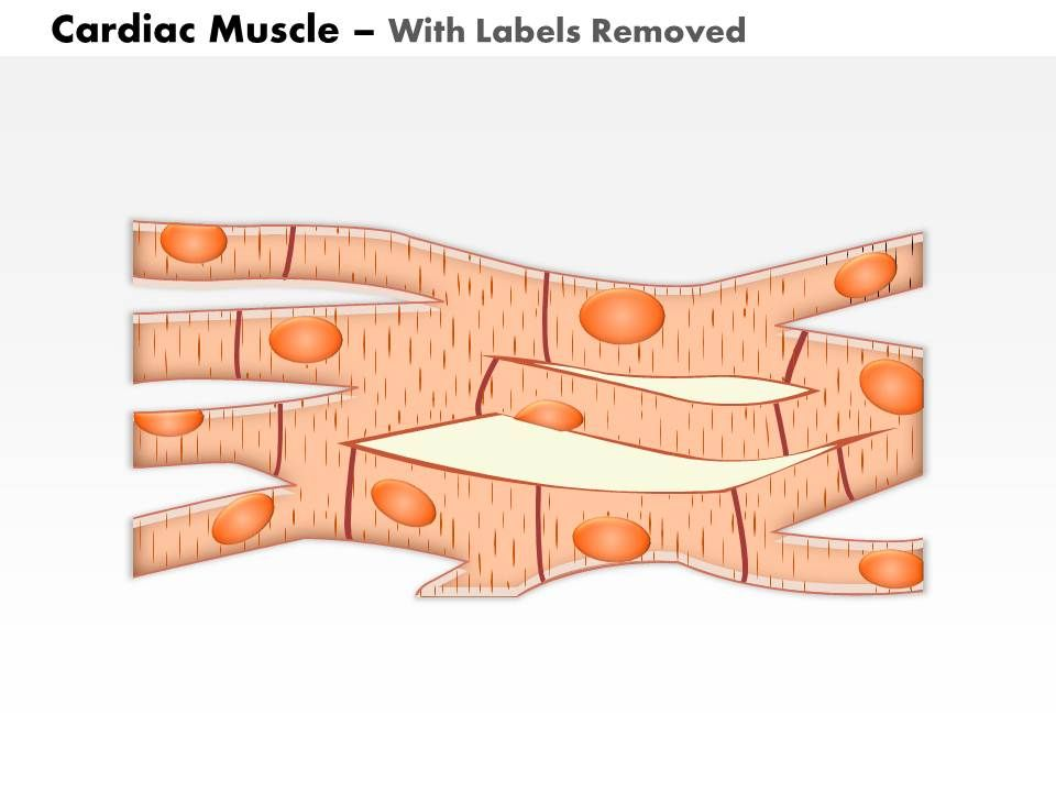 0614 Cardiac Muscle Medical Images For Powerpoint | PowerPoint ...