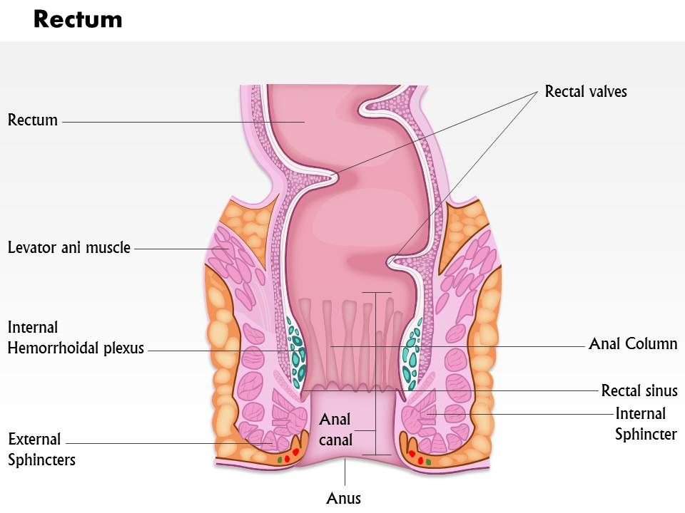 0614 Diagram Of Rectum Medical Images For Powerpoint Slide01