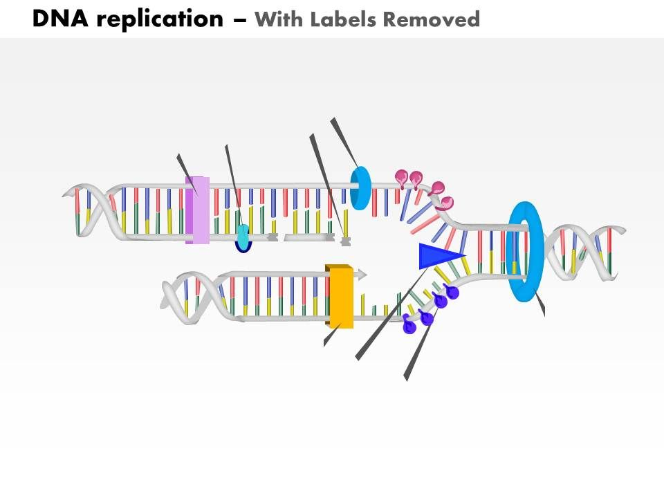 33 Label The Diagram Showing Dna Replication - Best Labels ...