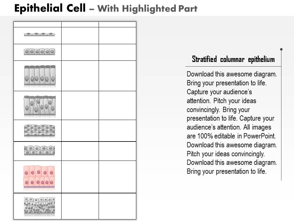 0614 Epithelial Cell Biology Medical Images For Powerpoint
