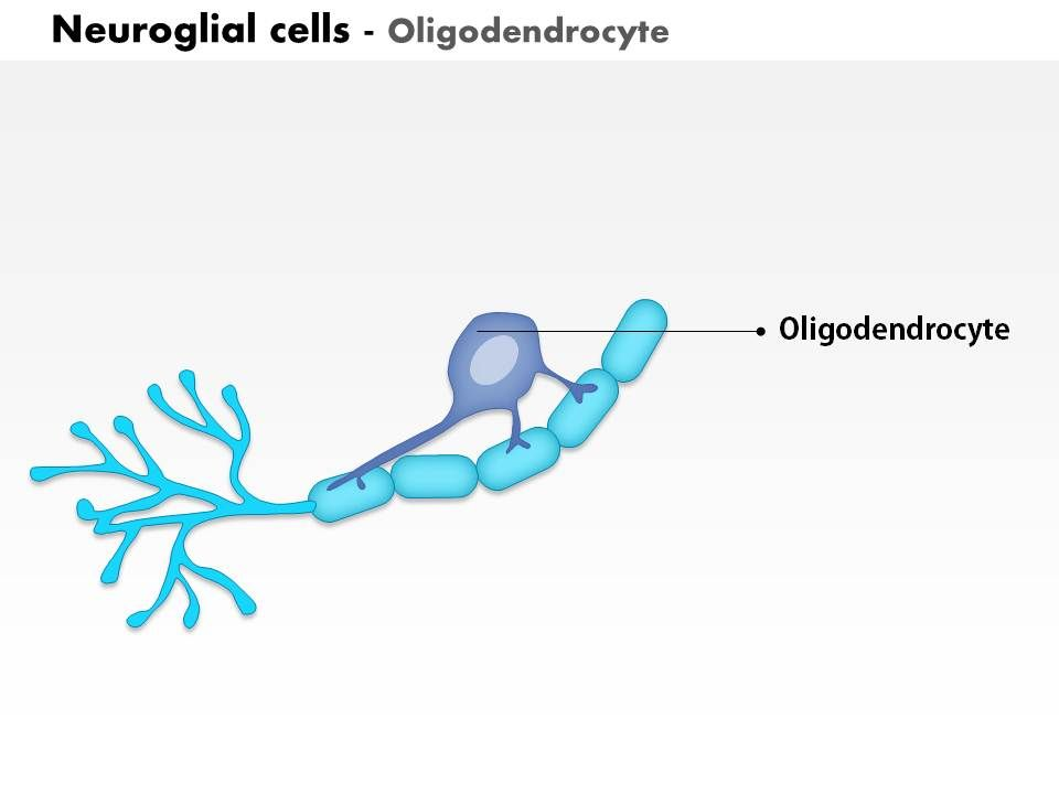 0614_neuroglial_cells_oligodendrocyte_medical_images_for_powerpoint_Slide01