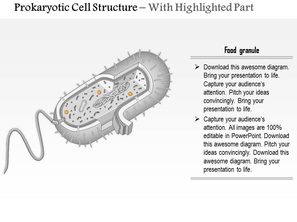 0614 prokaryotic cell structure medical images for powerpoint