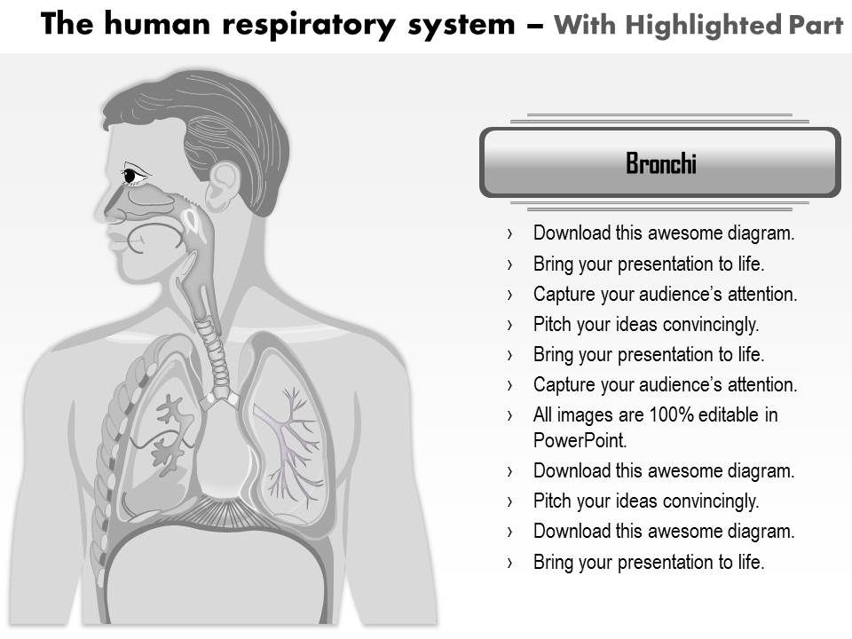 Download Powerpoint Presentation On Human Respiratory