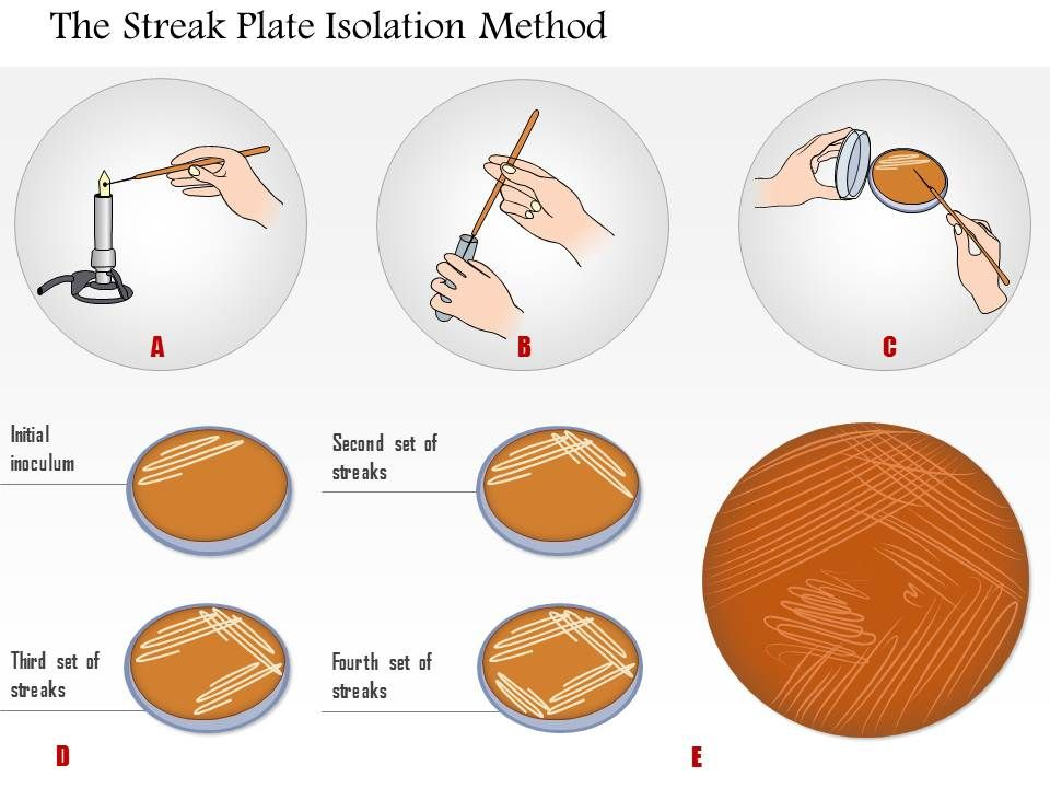 streak plate isolation 2 using the streak plate method of isolation, obtain isolated colonies from a mixture of microorganisms.