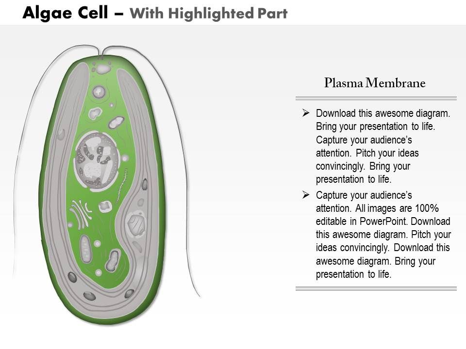 0714 algae cell medical images for powerpoint powerpoint design 0714algaecellmedicalimagesforpowerpointslide05 0714algaecellmedicalimagesforpowerpointslide06 ccuart Gallery