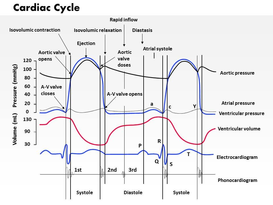 0714 Cardiac Cycle Medical Images For Powerpoint Powerpoint Shapes