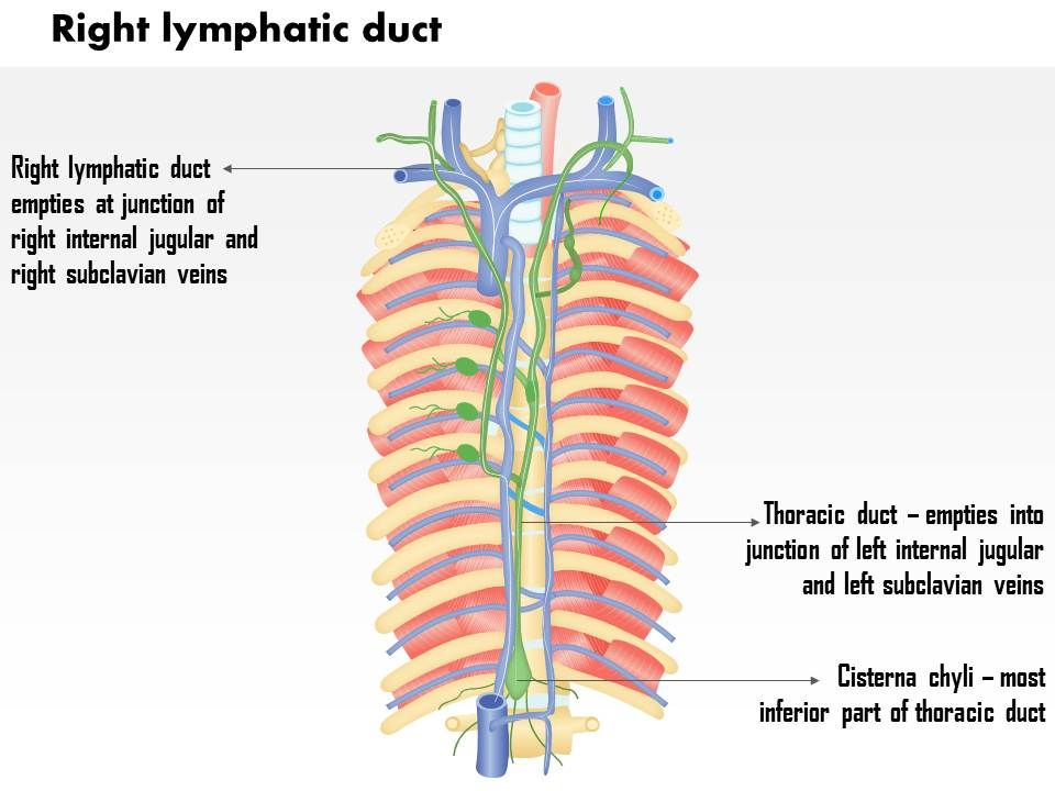 0714 right lymphatic duct medical images for powerpoint, Human Body