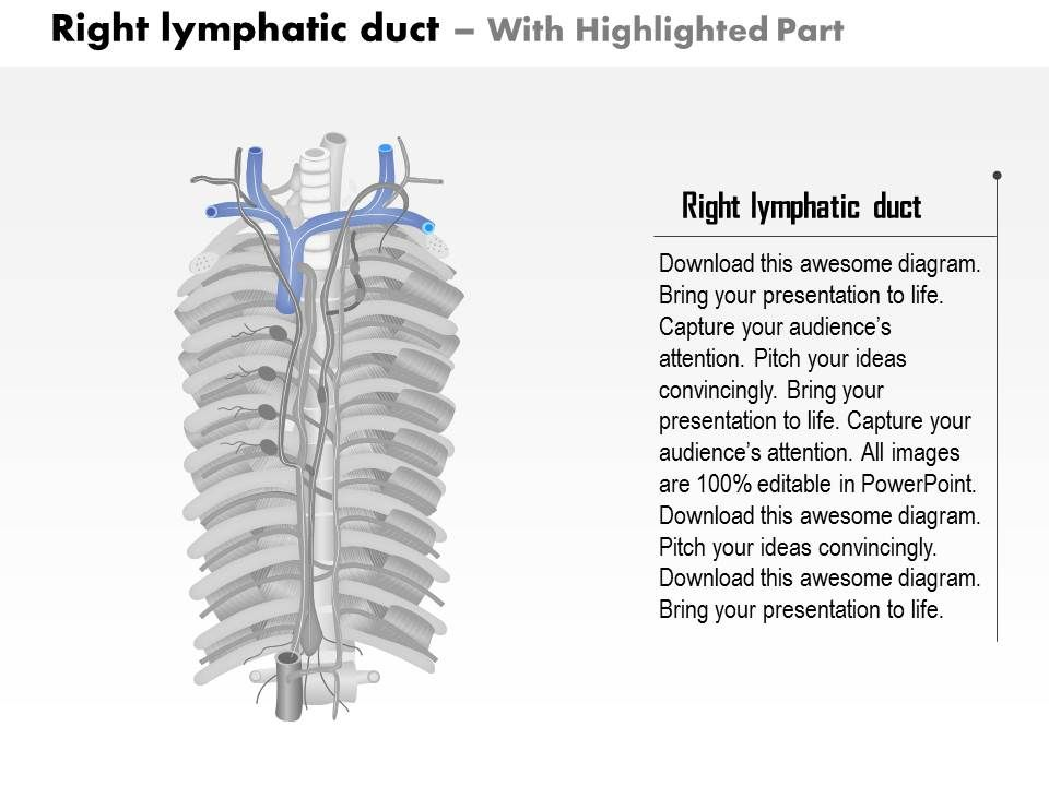 0714 Right Lymphatic Duct Medical Images For Powerpoint Powerpoint