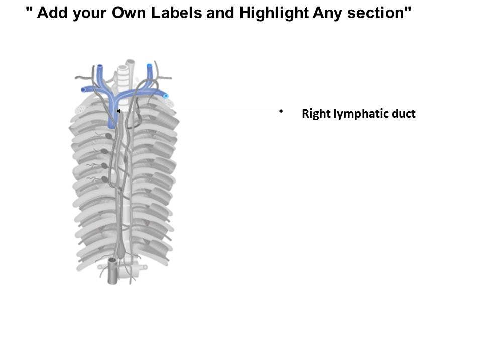 28990535 style medical 2 immune 1 piece powerpoint presentation diagram infographic slide