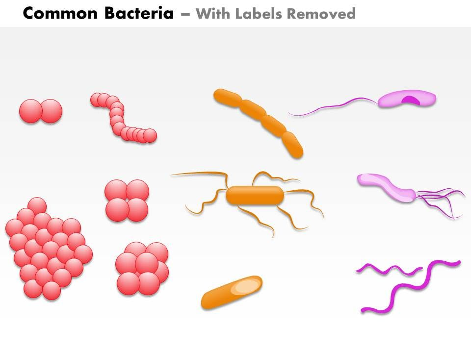 0814 Common Bacteria Infecting Human Medical Images For Powerpoint
