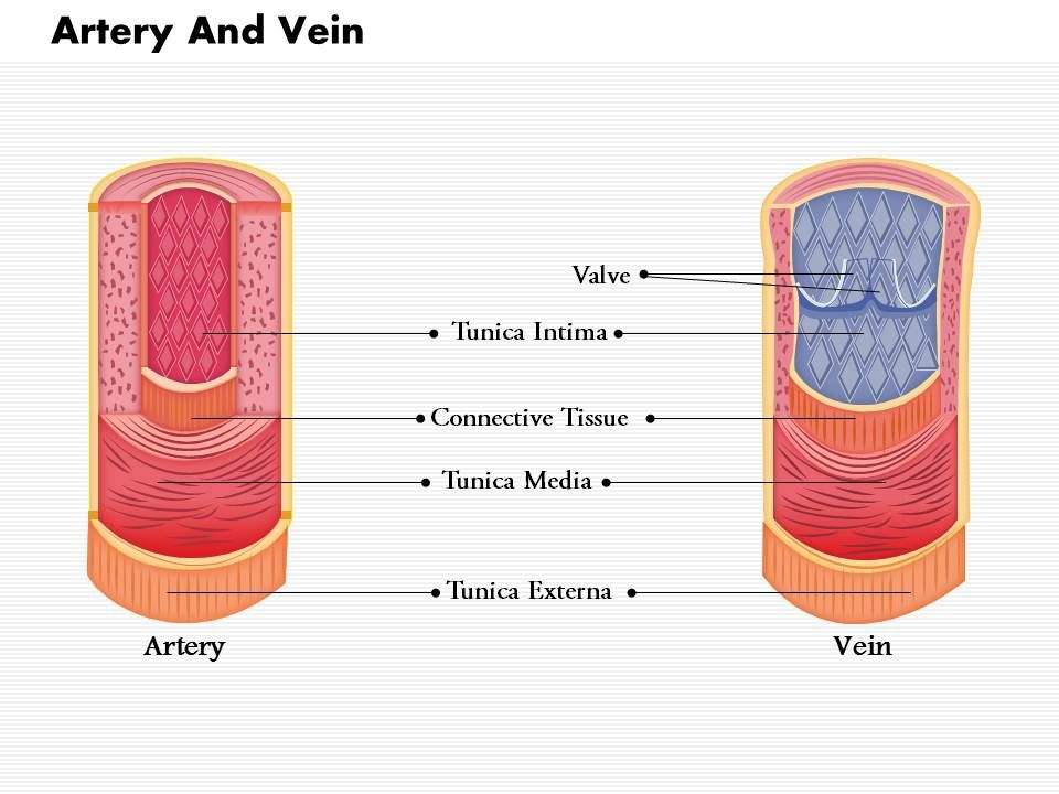 0814 Diagram Of Artery And Vein Medical Images For Powerpoint