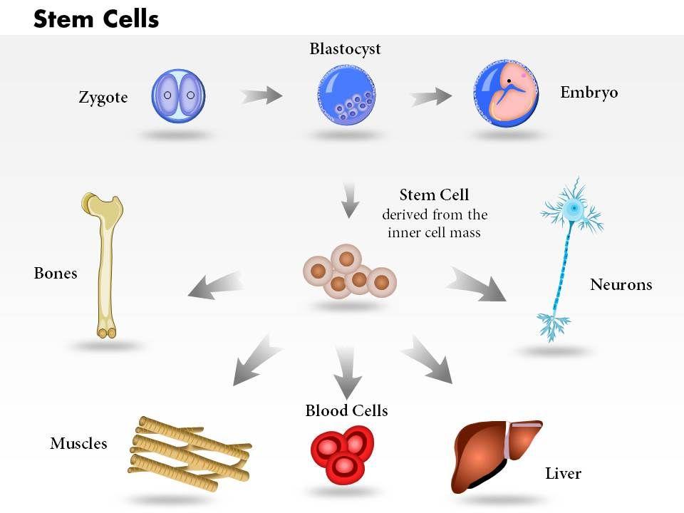 Biological presentation on stem cells.