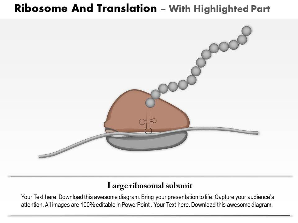 0814 ribosome and translation medical images for