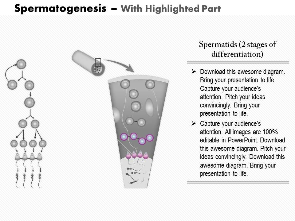0814 spermatogenesis medical images for powerpoint ppt images 0814spermatogenesismedicalimagesforpowerpointslide05 0814spermatogenesismedicalimagesforpowerpointslide06 ccuart
