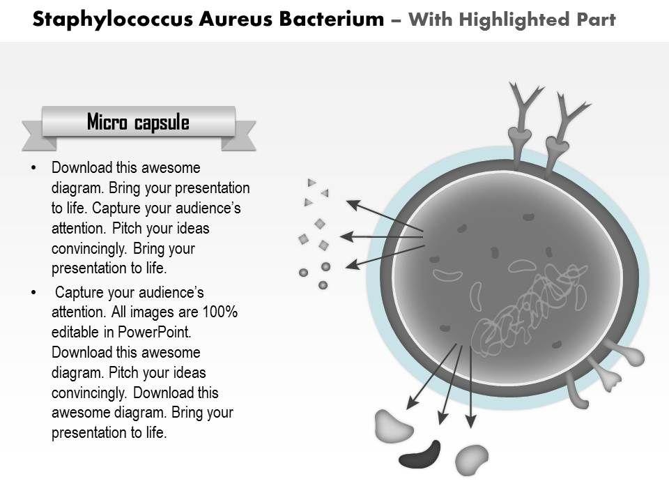 0814 Staphylococcus Aureus Bacterium Medical Images For Powerpoint ...