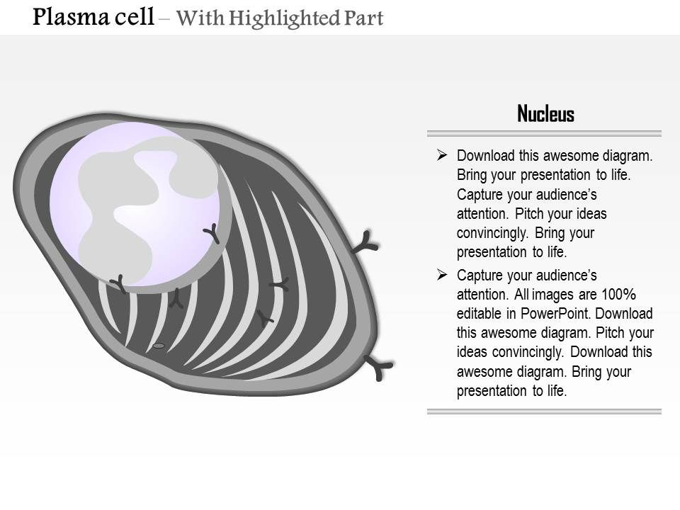 0814 structure of the plasma cell medical images for powerpoint 0814structureoftheplasmacellmedicalimagesforpowerpointslide03 0814structureoftheplasmacellmedicalimagesforpowerpointslide04 publicscrutiny Gallery
