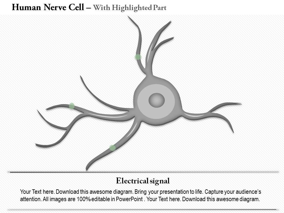 0914 human nerve cell medical images for powerpoint powerpoint 0914humannervecellmedicalimagesforpowerpointslide04 0914humannervecellmedicalimagesforpowerpointslide05 ccuart Choice Image