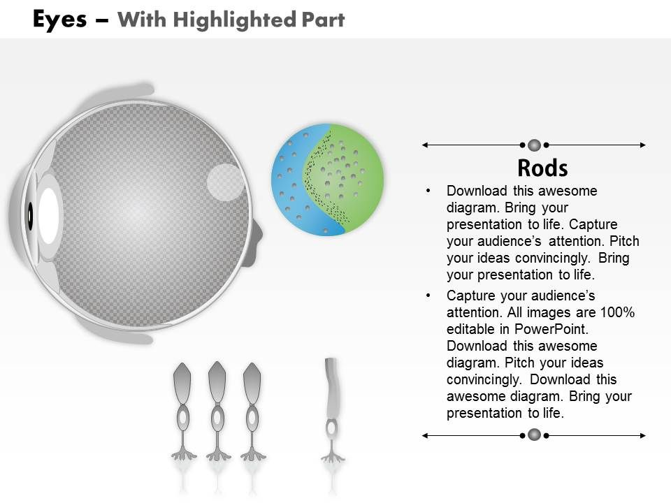 0914 Schematic Structure Of The Retina Rod Cells And Cone Cells
