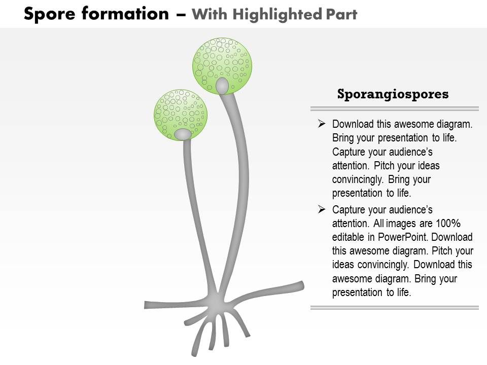 0914 Spore Formation Medical Images For Powerpoint Ppt Images