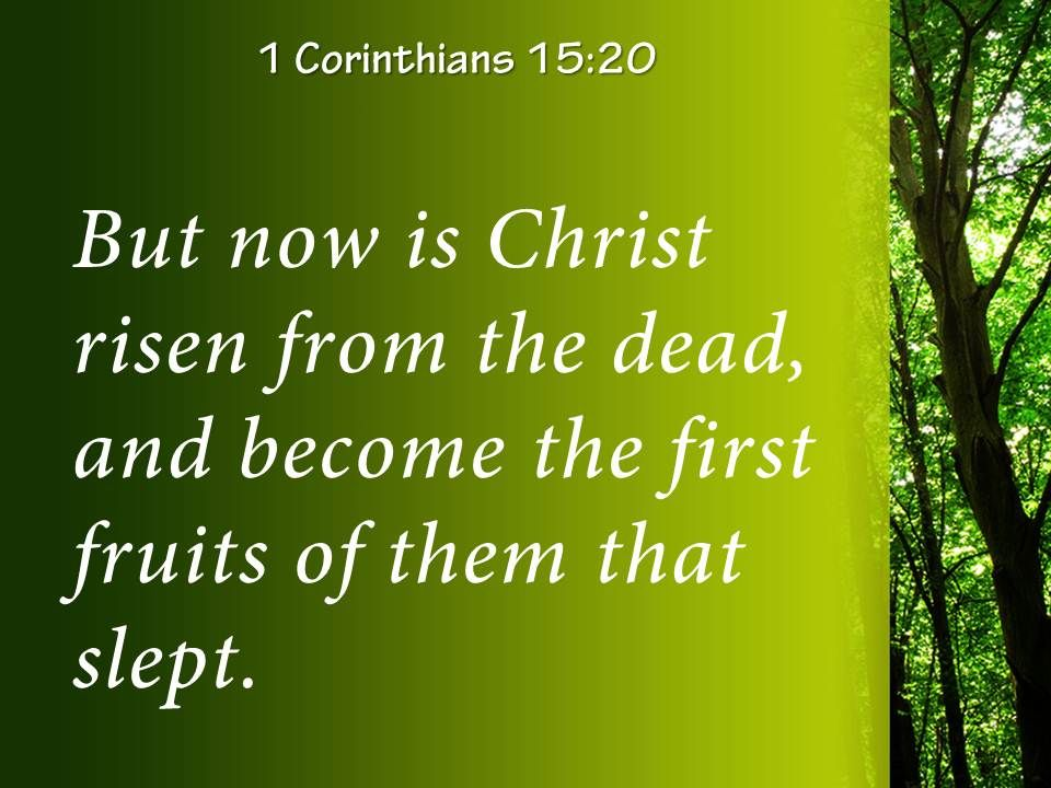 1 Corinthians 15 20 The First Fruits Of Those Powerpoint