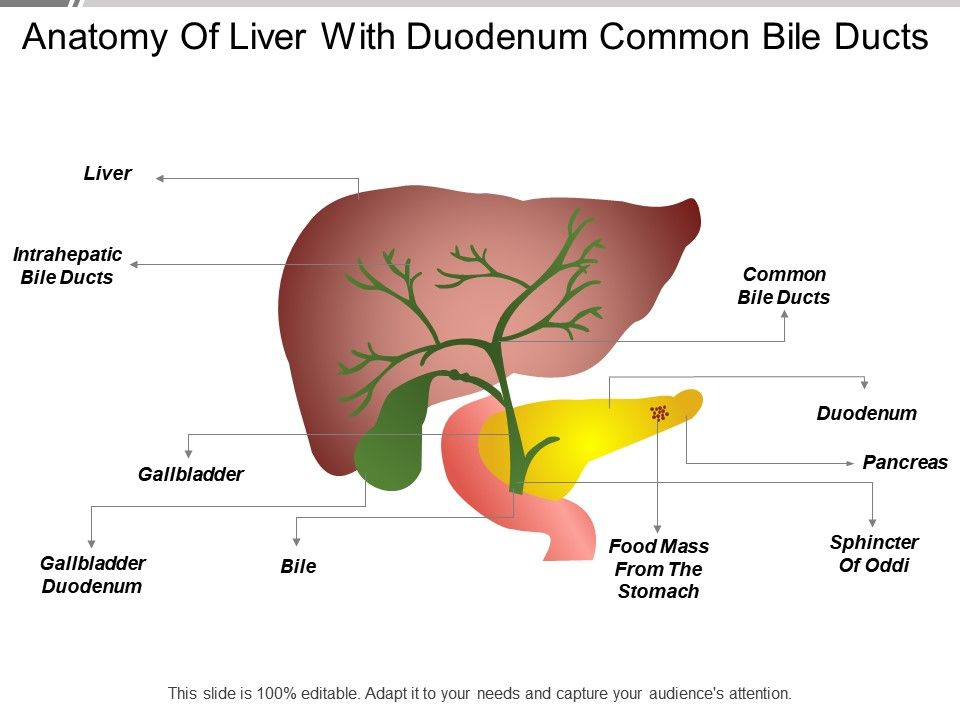 Anatomy Of Liver With Duodenum Common Bile Ducts Templates