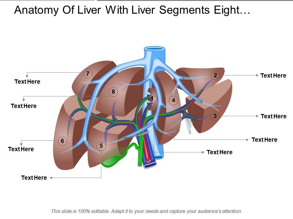 Anatomy Of Liver With Liver Segments Eight Segments Powerpoint