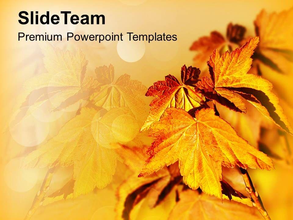 Autumn leaves background beauty powerpoint templates ppt themes and autumnleavesbackgroundbeautypowerpointtemplatespptthemesandgraphics0213slide01 toneelgroepblik Choice Image