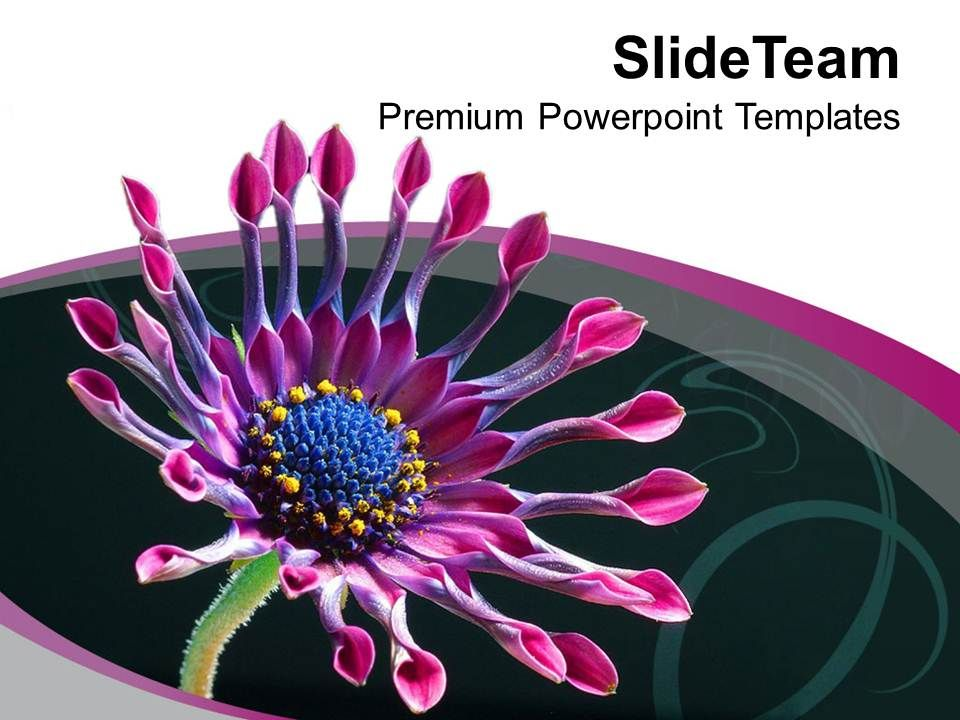 Beautiful Flower Background Theme Powerpoint Templates Ppt