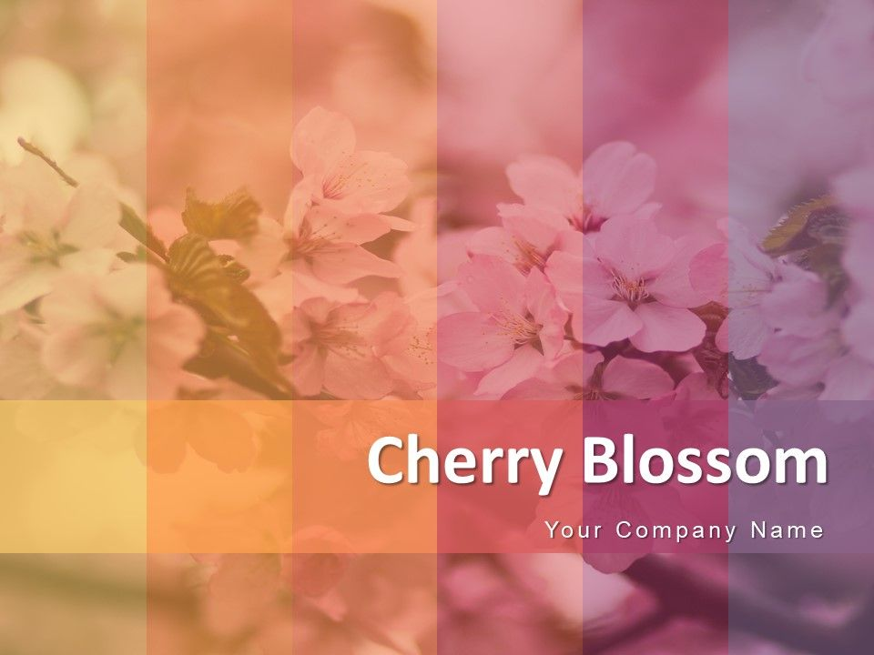 Cherry Blossom Flower Showing Circular With Full Of Flowers Powerpoint Presentation Slides Powerpoint Slide Images Ppt Design Templates Presentation Visual Aids