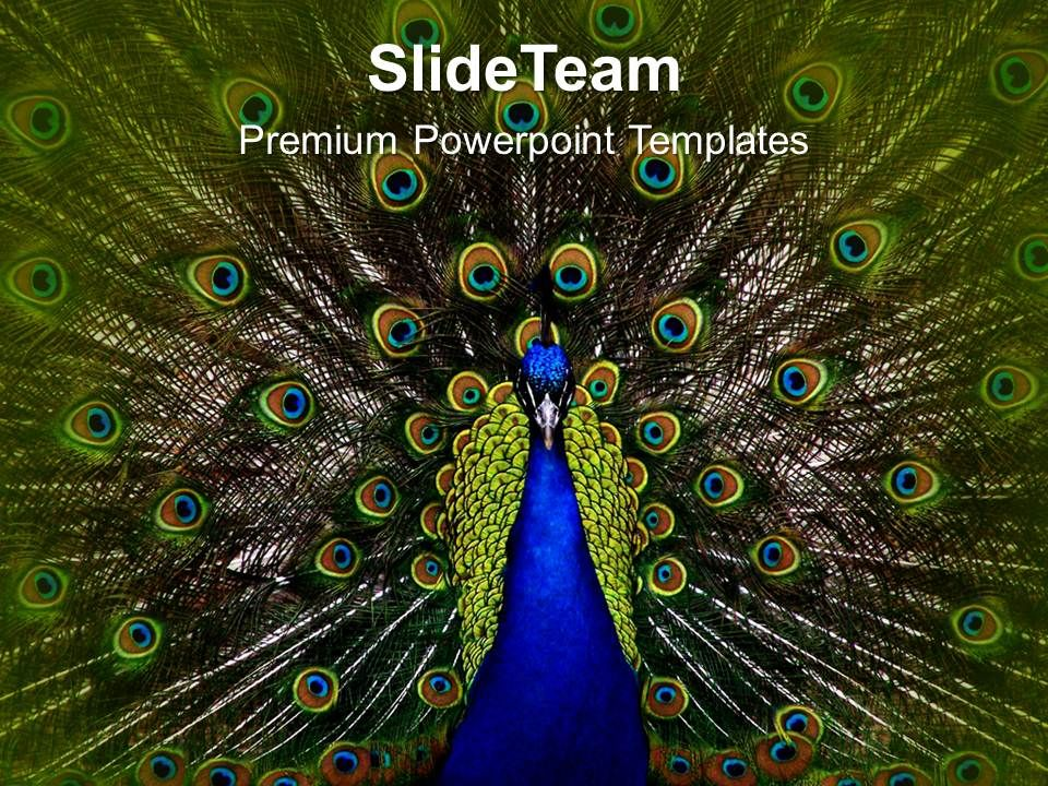Dancing peacock beauty powerpoint templates ppt themes and dancingpeacockbeautypowerpointtemplatespptthemesandgraphics0213slide01 toneelgroepblik Images