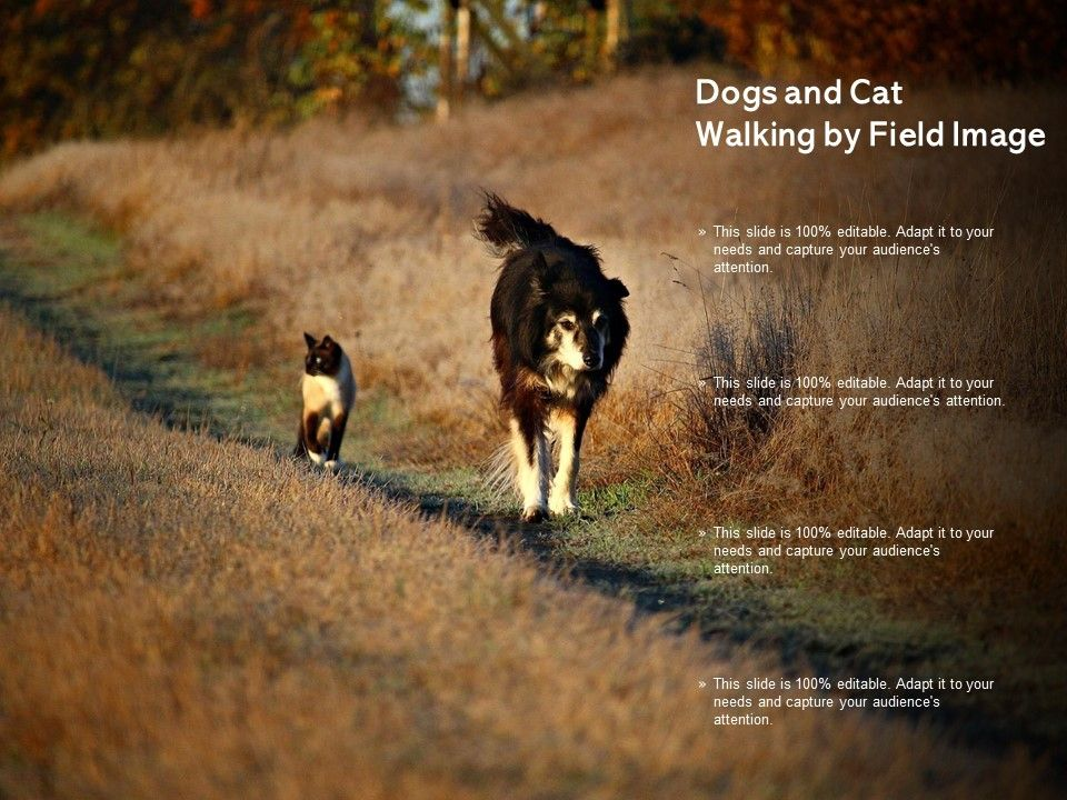 Dogs And Cat Walking By Field Image Powerpoint