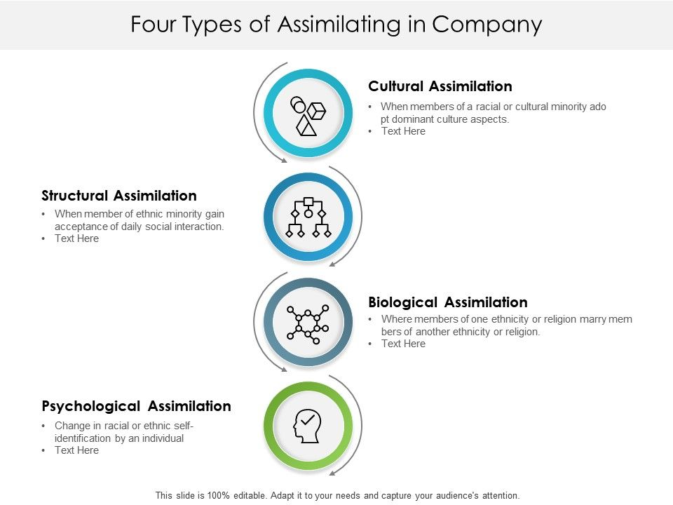 Four Types Of Assimilating In Company   PowerPoint Templates