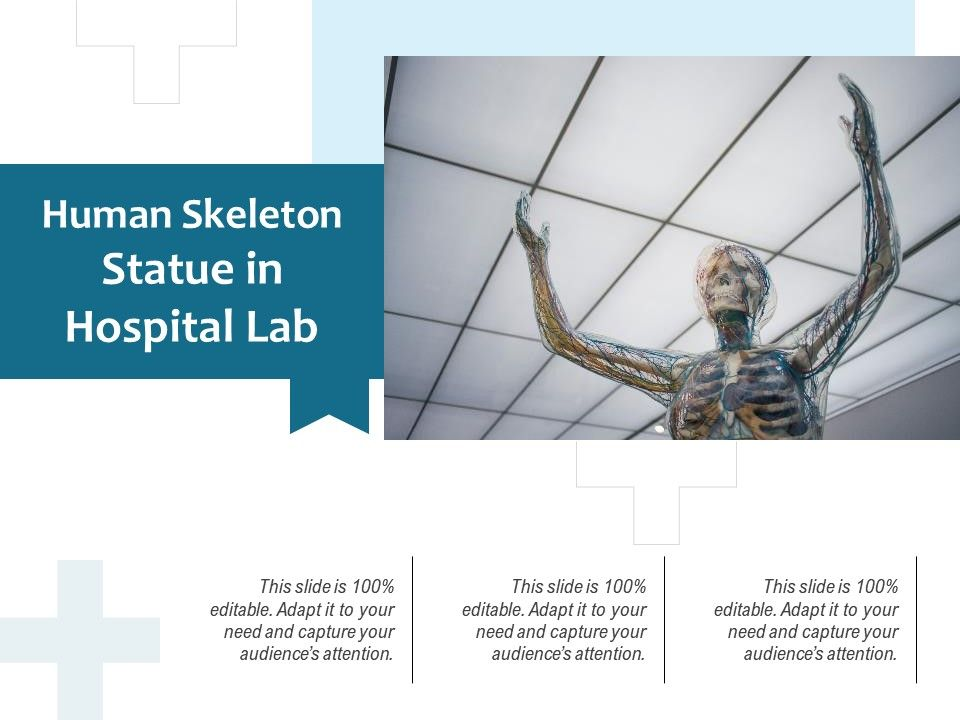 Human Skeleton Statue In Hospital Lab