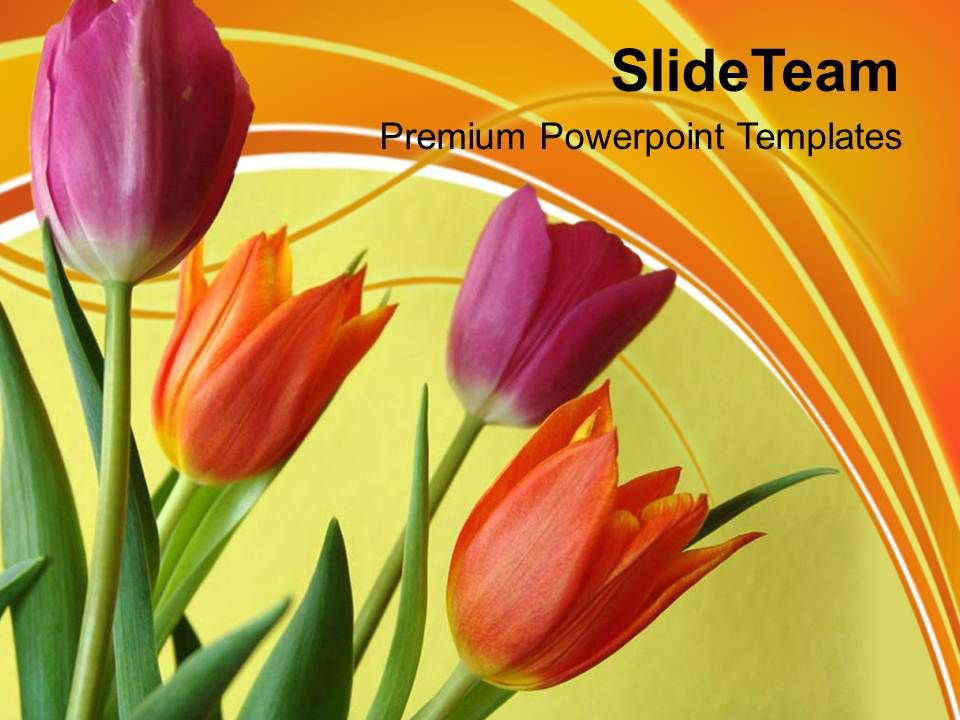 Illustration Of Colorful Tulip Flowers Powerpoint Templates Ppt