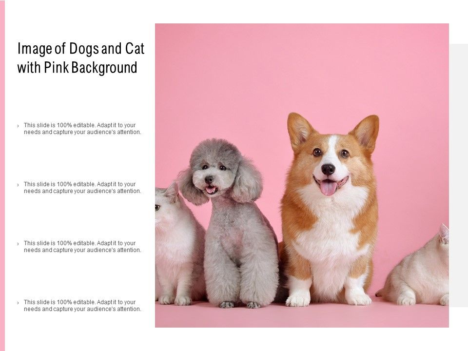 Image Of Dogs And Cat With Pink Background Powerpoint