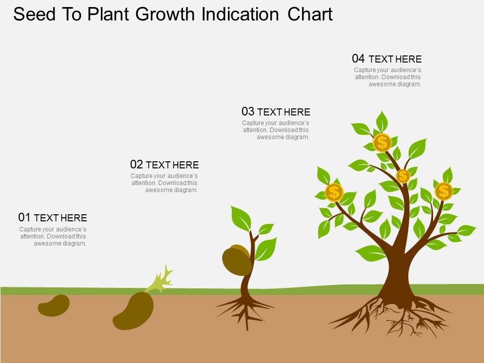 Oy Seed To Plant Growth Indication Chart Flat Powerpoint Design