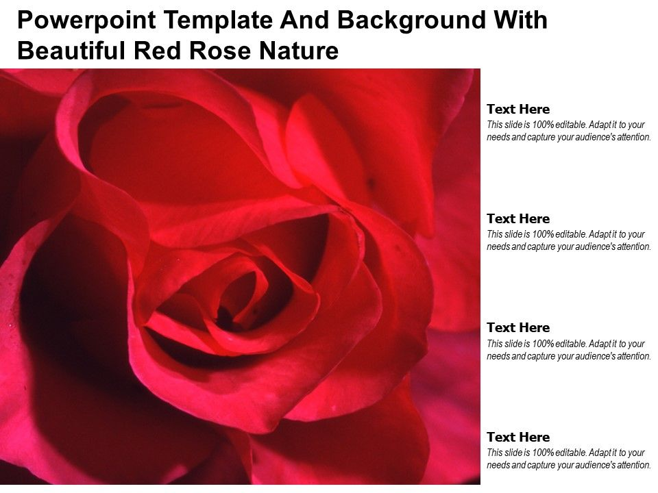 Powerpoint Template And Background With Beautiful Red Rose Nature Presentation Graphics Presentation Powerpoint Example Slide Templates