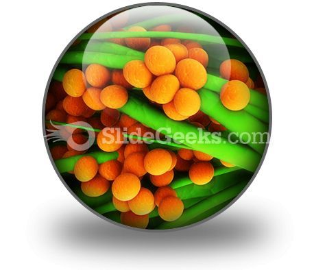 Staphylococcus Science PowerPoint Icon C  Presentation Themes and Graphics Slide01